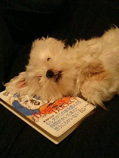 the book is my pillow.jpg